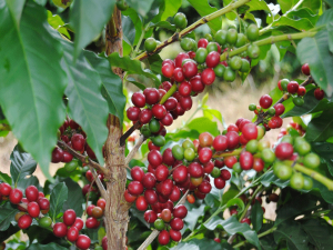 Nikaragua Miskito (1)