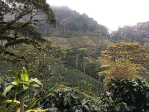 Nikaragua Miskito (3)