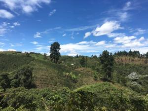 kolumbia kogi (5)