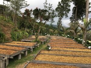 kostaryka orosi (2)
